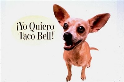 This undated picture provided by Taco Bell shows part of a Taco Bell advertisement featuring a Chihuahua professing his love for tacos.