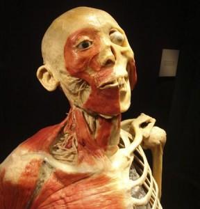 Foxwoods' Bodies Exhibit