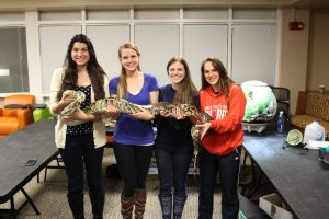 ALD E-board members Victoria Andrade, Kaitlyn O'Boyle, Diana Piccarillo and Kayla Delano pose with the Burmese python (Photo by Alyssa MacKinnon/Charger Bulletin photo)