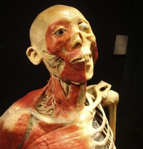 Foxwoods' Bodies Exhibit