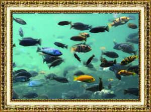 """By Samantha Reposa Sophomore Pennsylvania  November 2013 """"Just keep swimming,"""" said Reposa."""