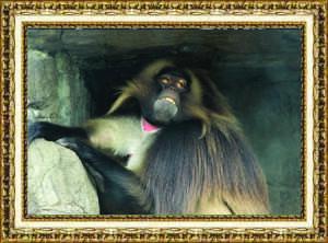 Samantha Reposa, sophomore The Bronx Zoo New York, N.Y. April 2016